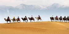 骆驼电气 骆驼电器 骆驼厨卫 骆驼厨电